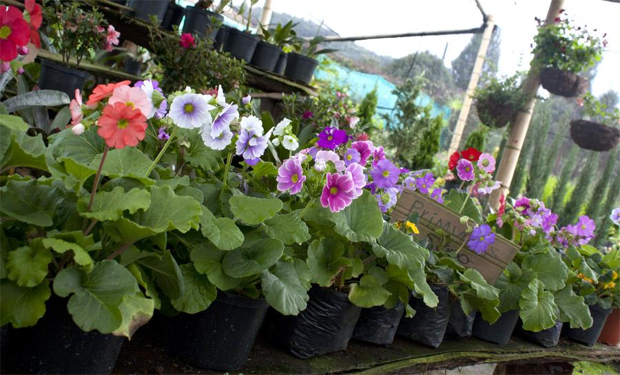 En rad med blommor som Carlos säljer