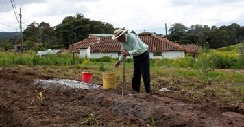 Luis Alfonso jobbar på en åker