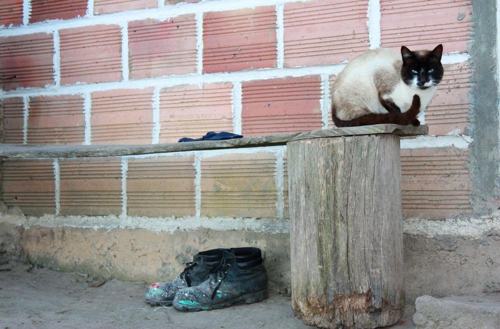 En katt sitter på en bänk